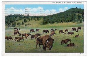 Buffalo on the Range in the Rockies