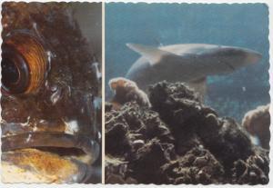Rockcode and shark, Undersea Gardens, Canada, unused Postcard