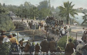 LOS ANGELES , California, 1900-10s ; Watching seals , West Lake Park