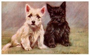 Dog ,   Susan and Sambo