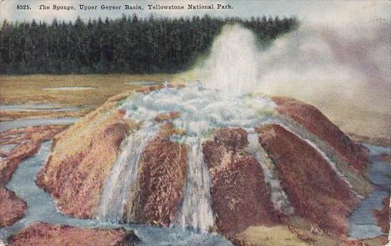 Wyoming Yellowstone National Park The Sponge Upper Geyser Basin