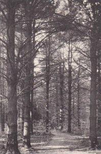 Scenic view, Bowker's Woods, Glendale,  Massachusetts,  00-10s