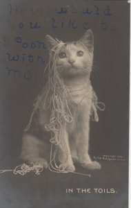 RP; In the Toils, Cat tangled up in yarn, 1900-10s