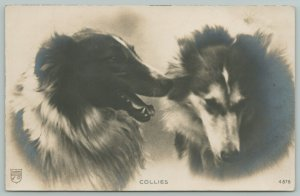RPPC 2 Collies Chat, 1 is Shamed: It's rude to bark at your paw like that! c1906
