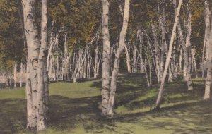 MANCHESTER , Vermont , 1950 ; Golf Links
