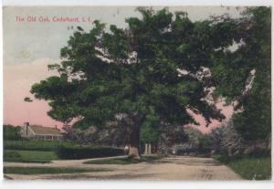 Cedarhurst LI - Old Oak