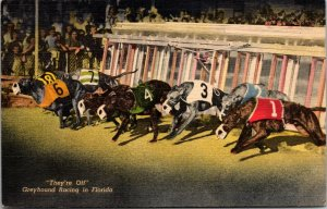 Greyhound Dog Racing Track in Florida at Night c1940's crowds - vintage postcard