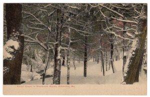 Biddeford, Me,  Winter Scene in Westbrook Woods