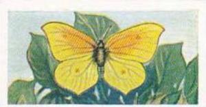 Swettenhams Tea Vintage Trade Card Butterflies & Moths 1958 No 11 Mediterrane...