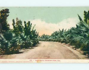 Pre-1907 PALM DRIVE AT PIEDMONT PARK Piedmont Park California CA t3556