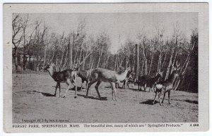 Springfield, Mass, Forest Park - Geo. S. Graves