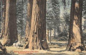 General Jackson Big Trees, Mariposa Grove, CA 1907 Hand-Colored Vintage Postcard