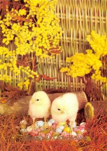 Happy Easter Baby Chickens on Eggs Flowers Frohe Ostern