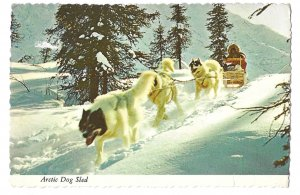 Arctic Dog Sled Team Vintage Alaska Joe 4X6 Postcard