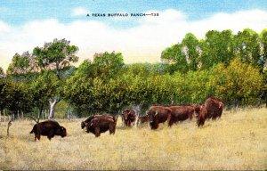 Texas A Typical Texas Buffalo Ranch