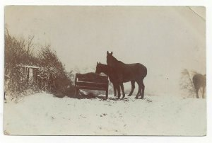RP: CLECKHEATON, England, PU-1904; Two Black Horses eating out of a manger