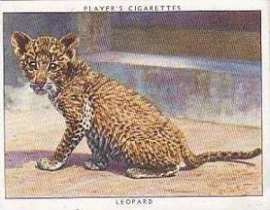 Player Vintage Cigarette Card Zoo Babies 1937 No 11 Leopard
