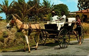 Barbados Old Donkey Drawn Buggy On A Country Road