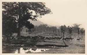 RP: Deer Park , NARA , Japan, 1910-30s