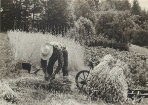 France Les Vosges vieux metiers moissonneur vintage Postcard
