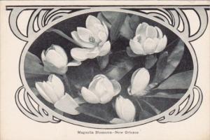 Magnolia Tree Blossoms New Orleans Louisiana