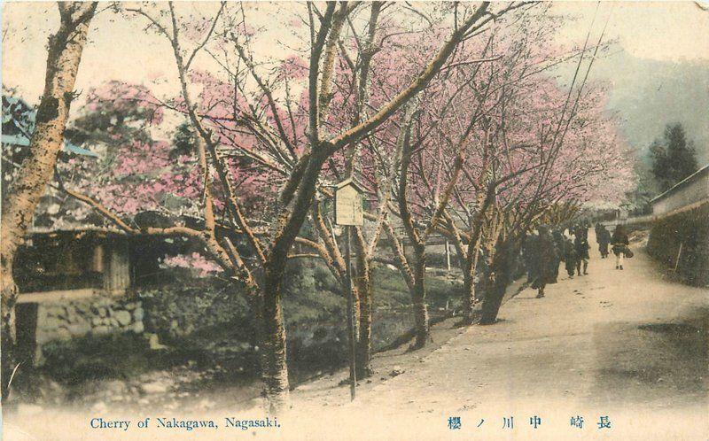 C-1910 Cherry of Nakagawa Nagasaki Japan Postcard hand colored postcard 11269