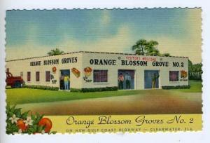 Clearwater FL Oranges Citrus Groves linen Postcard