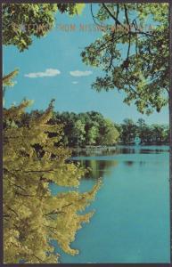 Greetings From Nisswa,MN Postcard