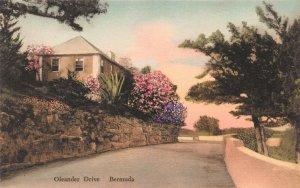 Oleander Drive, Bermuda, Early Hand Colored Postcard, Unused