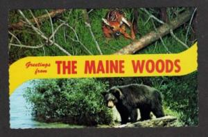 ME Greetings MAINE WOODS Black Bear & Fawn Postcard PC