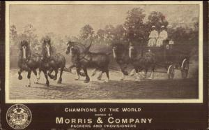 Morris & Company Packers 6 Horse Team Wagon c1910 Postcard