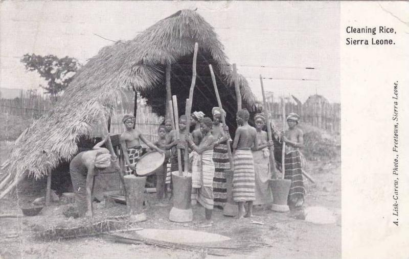 Topless Women, Cleaning Rice, Sierra Leone, Africa, PU-1911