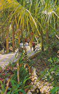 Wooded Nature Trail Homosassa Springs Florida