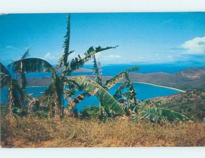 Pre-1980 NATURE SCENE St. Thomas US Virgin Islands USVI AD3899