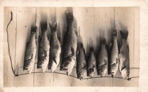 Bass Fish BIN
