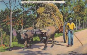 Puerto Rico Typical Scene On A Country Road Farmer and Ox Cart 1936