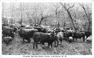 Larimore North Dakota~Crystal Spring Stock Farm~Cows & Pigs in Trees~1920s B&W
