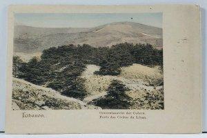 Lebanon View of Cedaro, La forêt des Cèdres de Dieu c1900 Postcard L7