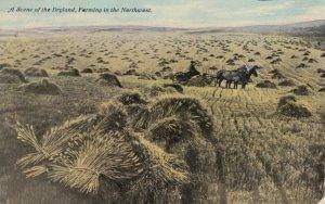 Dry Farming , Northwest USA , 00-10s