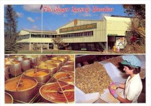 The Ginger Factory , Yandina, Queensland , Australia, 70-80s
