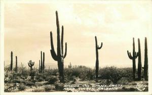 Frasher Giant Cacti Tucson Arizona 1935 RPPC Photo Postcard 3457