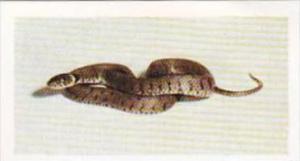 Hornimans Tea Trade Card Pets No 40 Grass Snake