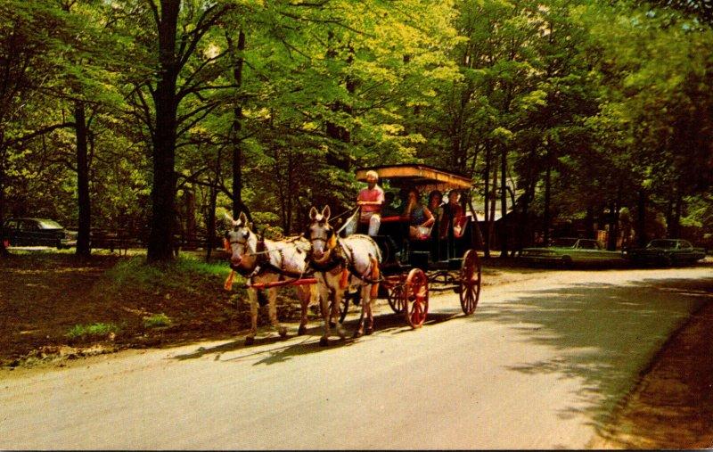 Indiana Spencer McCormick's Creek State Park Surrey Riding