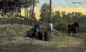 Occupational Postcard Postcards  Sugar Cane