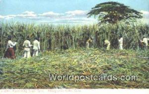 Republic of Cuba Harvesting Sugar Cane  Harvesting Sugar Cane