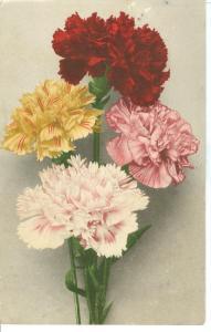 Flowers, 1906 used Postcard