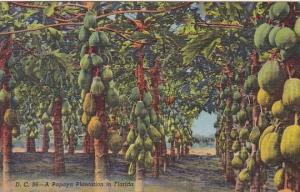 Florida Miami A Papaya Plantation In Florida