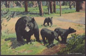 Mother Bear and Cubs Postcard