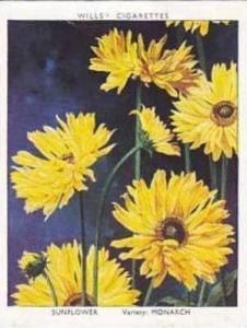 Wills Vintage Cigarette Card Garden Flowers 1938 A Series No 33 Sunflower Mon...