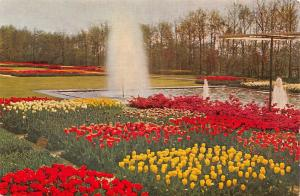 Netherlands Keukenhof Lisse Holland Tulips Flowers Fountain